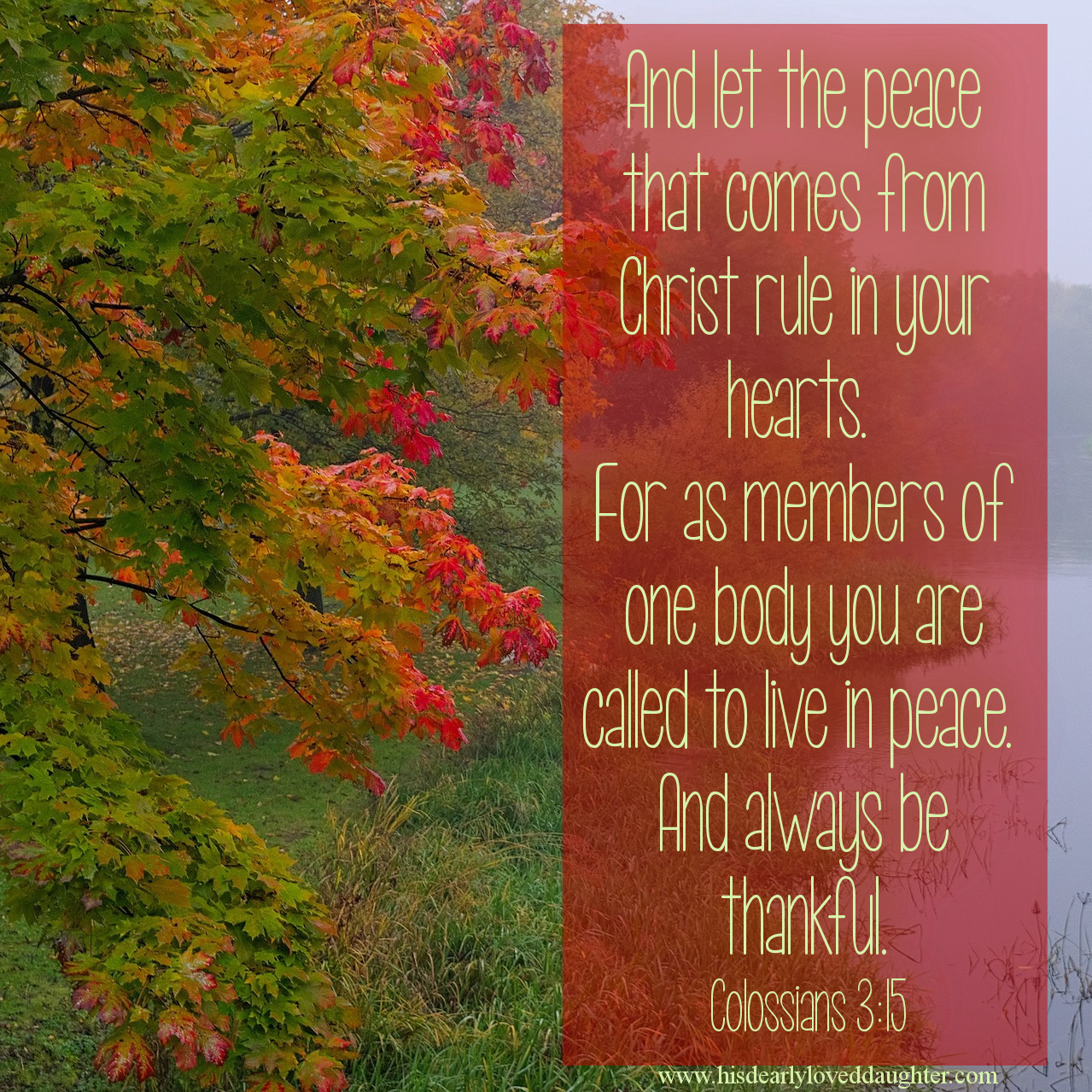 And let the peace that comes from Christ rule in your hearts. For as members of one body you are called to live in peace. And always be thankful. Colossians 3:15 #Thanksgiving #Verses #truth #Scripture #WordOfGod #BibleVerse