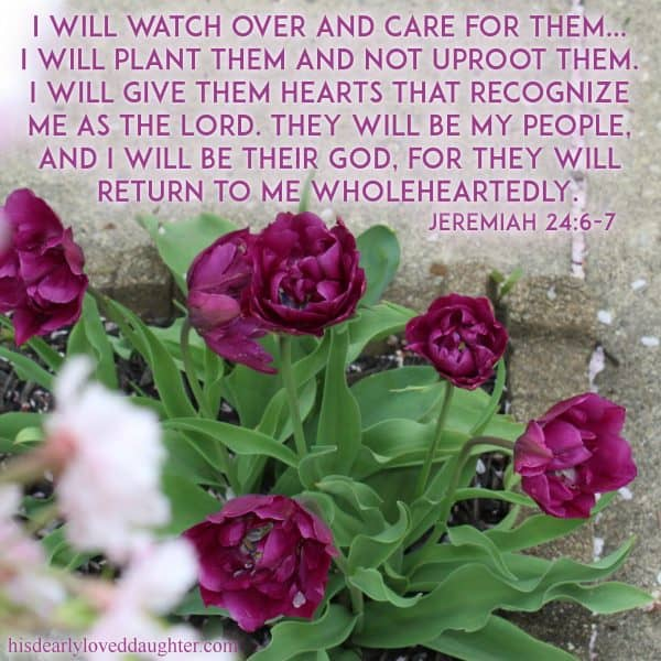 I will watch over and care for them... I will build them up and not tear them down. I will plant them and not uproot them. I will give them hearts that recognize Me as the Lord. They will be My people, and I will be their God, for they will return to me wholeheartedly. Jeremiah 24:6-7
