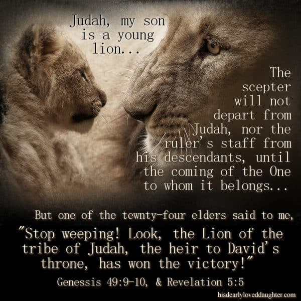 "Judah, my son, is a young lion... The scepter will not depart from Judah, nor the ruler's staff from his descendants, until the coming of the one to whom it belongs... But one of the tewnty-four elders said to me,""Stop weeping! Look, the Lion of the tribe of Judah, the heir to David's throne, has won the victory!"" Genesis 49:9-10 & Revelation 5:5"