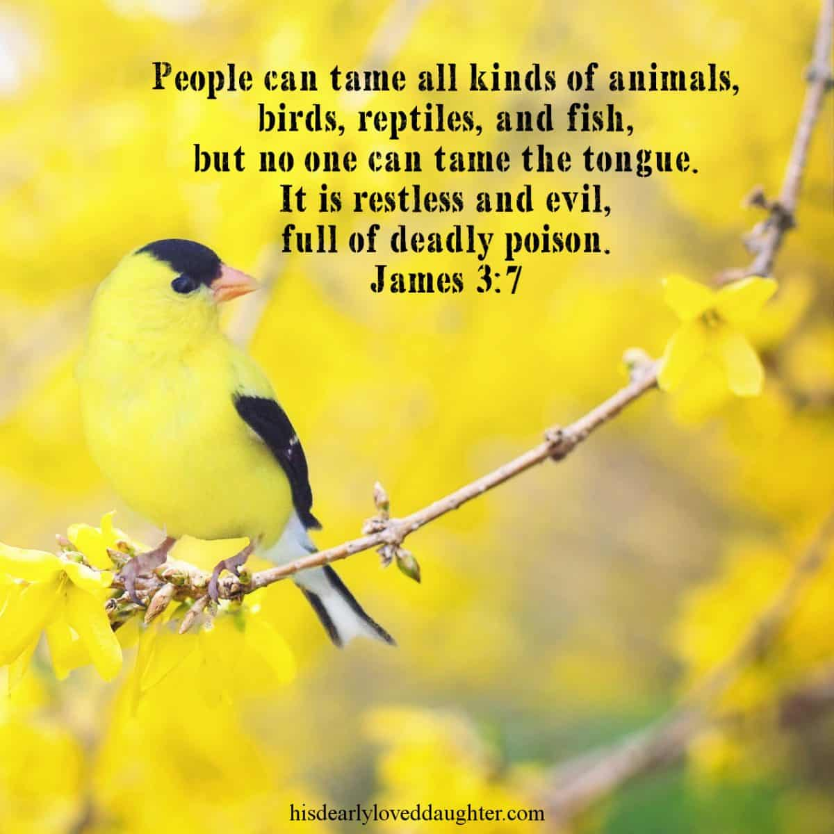 People can tame all kinds of animals, birds, reptiles, and fish, but no one can tame the tongue. It is restless and evil, full of deadly poison. James 3:7
